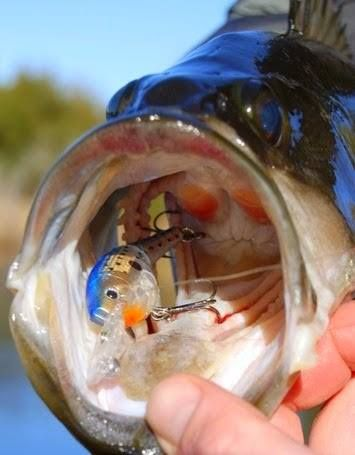 predator fish species are attracted to radiant ultra violet and, Reel Combo