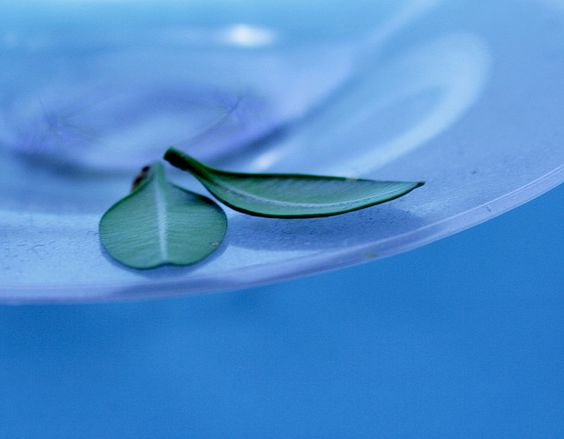 Zen Green Leaves on Peaceful Blue | Flickr - Photo Sharing!