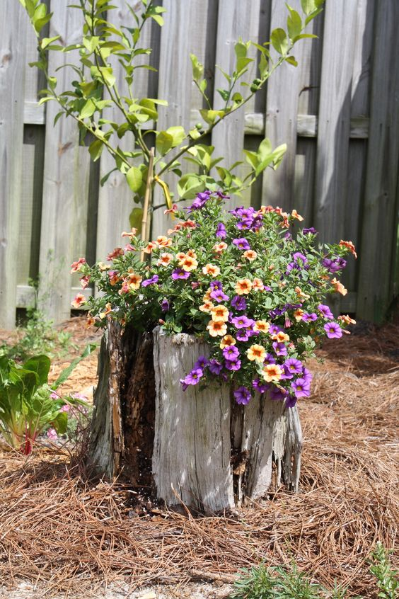 Flowers in an old stump