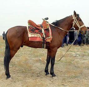 Karabair Horse - Uzbekistan
