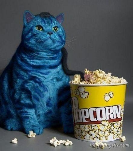 Popcorn Eating Cat Meme