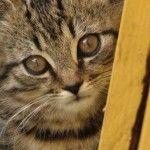 Ich gründe einen Tierschutzverein %28Ironie%29