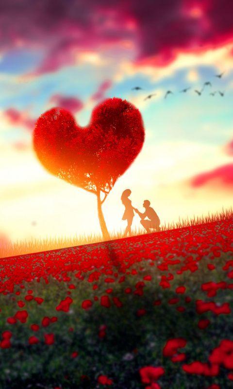 Couple Romantic Moment Rose Farm Tree Sunset 480x800 Wallpaper Love Wallpaper Hd Wallpaper Iphone Amazing Hd Wallpapers