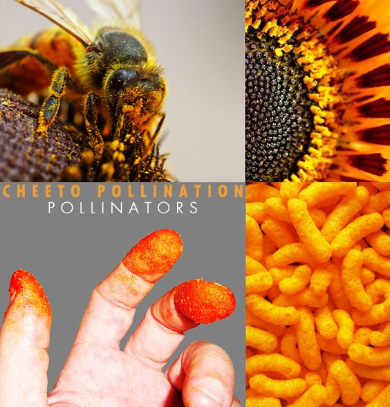 How are honeybees vital to an ecosystem? Lesson and video