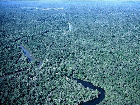 Parque Nacional do Juruena: Floresta Amazônica