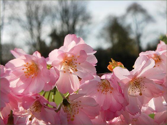 Baumblüten im April - Jahreszeiten - Galerie - Community