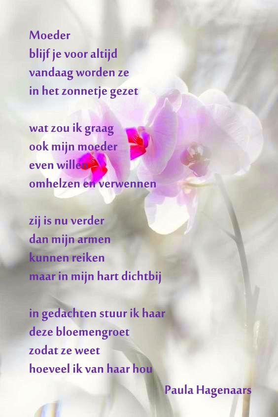 Gedichten Paula Hagenaars Familie Gedichten Gedicht