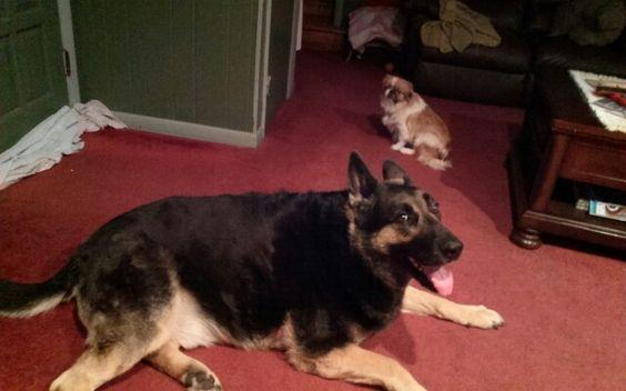 My dogs Dozer & Star