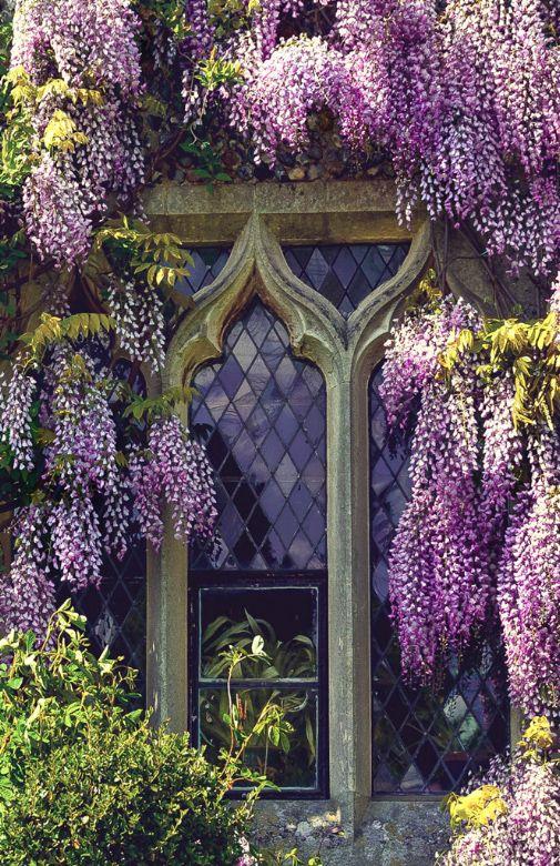 Image: Svetlana Sewell - Window with lilacs #1