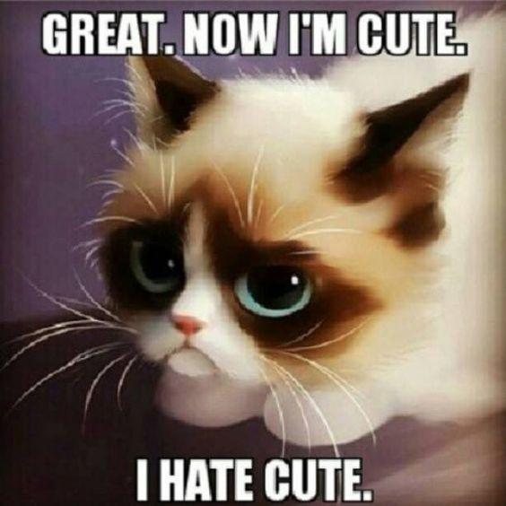 I hate cute. | Grumpy Cat | Pinterest | Cats, Too cute and Lol Loathe Cat