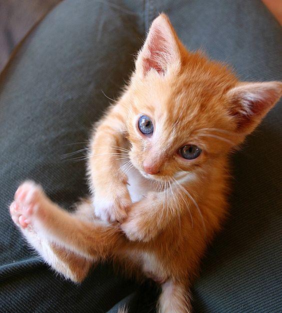 orange kitten   Kitties & Cuteness   Pinterest   Tabby ...