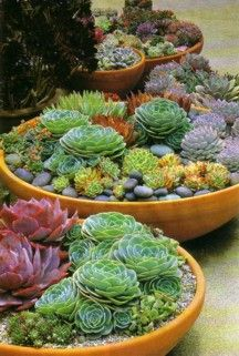 Succulents for the deck