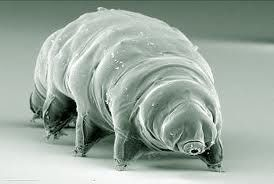 The tardigrade (tardi - slow, grado - walk) is a multi-cellular creature. It's special feature is the process of cryptobiosis. By this process, when put in an extreme cold, the tardigrade creates smaller ice crystals so that they will not be integrated into one that is large enough to burst through cell membranes. It can also slow the process of liquid in the blood solidifying. It keeps alive by reducing the metabolic activity to a minimum. As soon as the ice thaws, it starts to move around.
