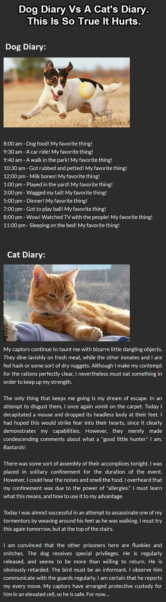 Cats Vs Dogs: This Is The Best Diary Comparison Ever.: