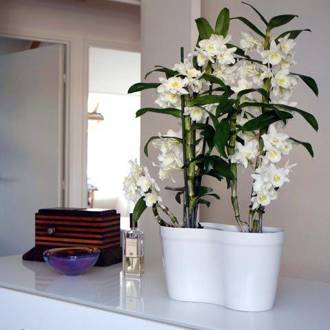 m 233 mo entretien de vos orchid 233 es pour que les orchid 233 es se