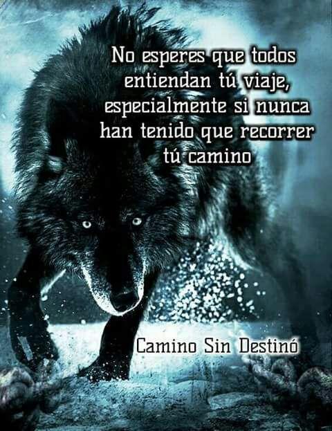 Imágenes De Lobos Guerreros Con Frases De Reflexión Frases