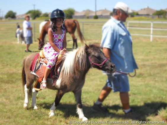 Pony rides for birthday parties are always a hit!