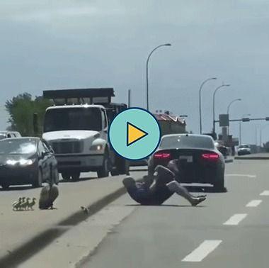 Homem brigando com ganso na estrada
