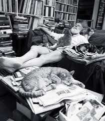 Hemingway y los gatos