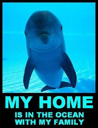 Dolphins Animal rights: