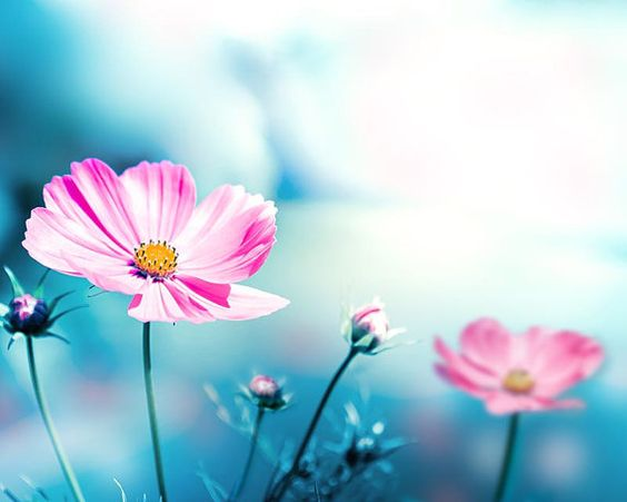 flower photography pink floral photography by mylittlepixels
