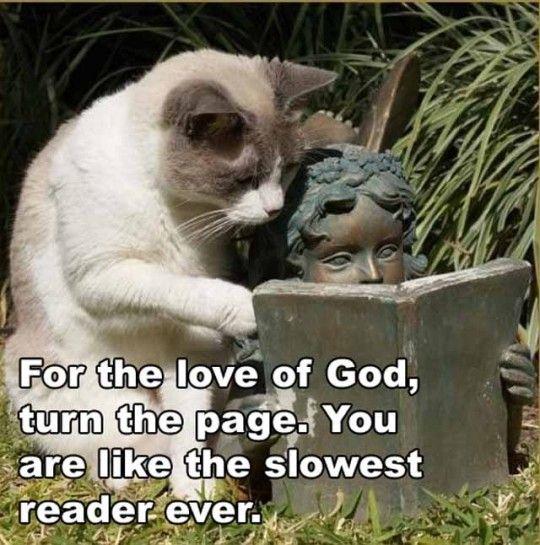 cat & statue reading