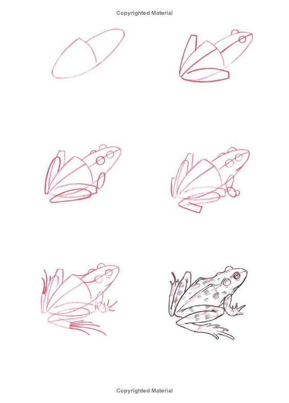 Dessiner une grenouille techniques de dessin - Dessiner une grenouille ...