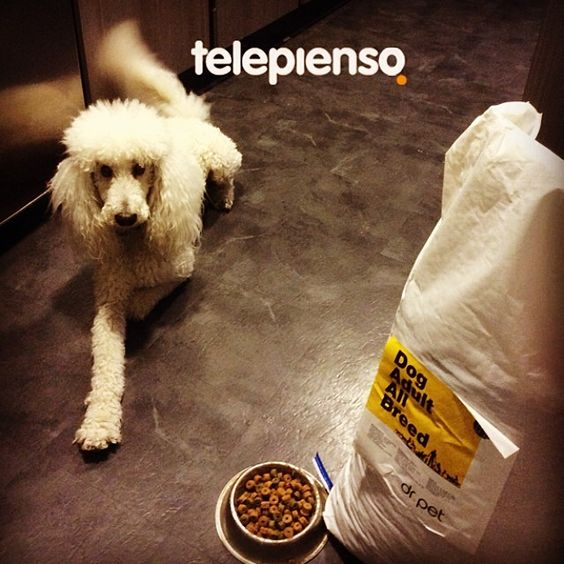 http://www.telepienso.com/products/dr-pet-adult