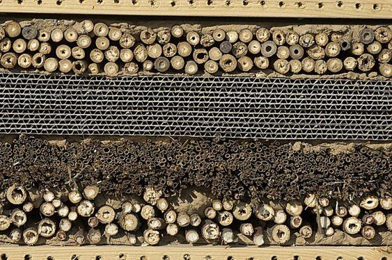 Fabriquer un abri à guêpes et abeilles solitaires - Les jardins de Noé