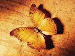 Orange butterfly!