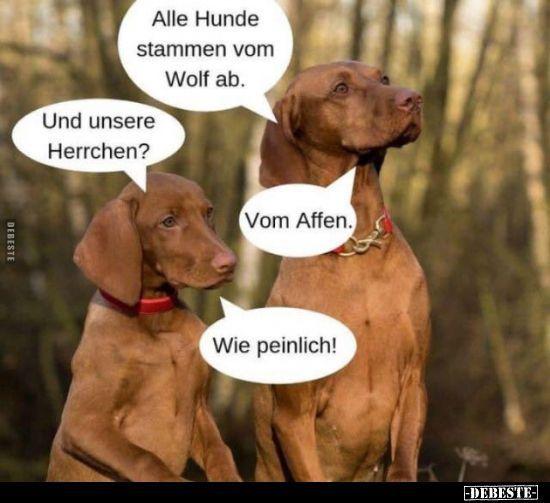 Alle Hunde Stammen Von Wolf Ab Alle Hunde Stammen Von Wolf Ab Alle Hunde Stammen Von Wolf Ab In 2020 What Dogs Dogs Humor