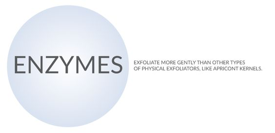 Enzymes exfoliate more gently than other types of physical exfoliators, like apricot kernels.