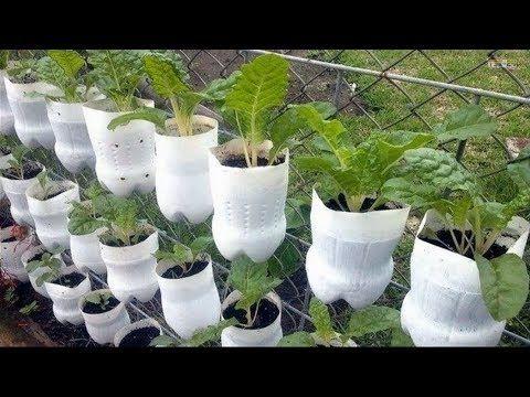 979b952f50be4e43e6f0a1f80bdd5ecc - How To Use Plastic Containers For Gardening