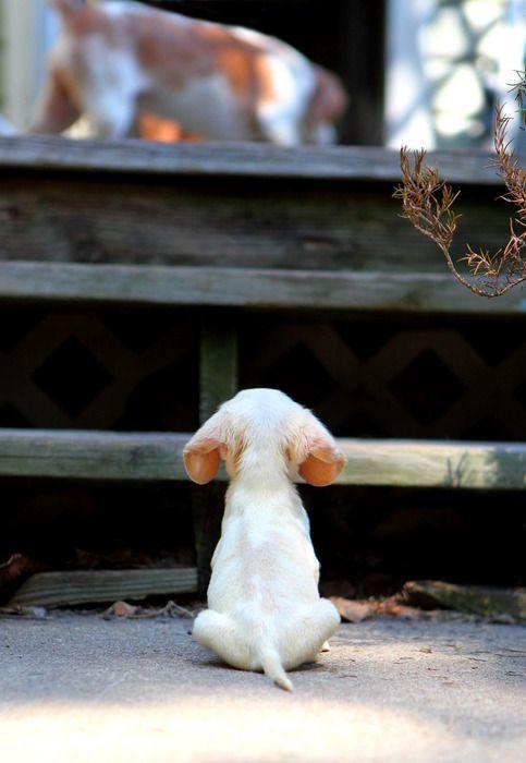 Pup at steps