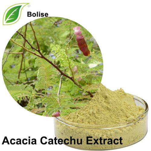 Acacia Catechu Extract Acacia Herbal Extracts Herbalism