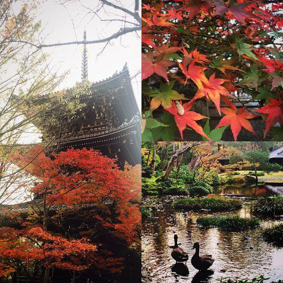 autmn leaves in Kyoto.