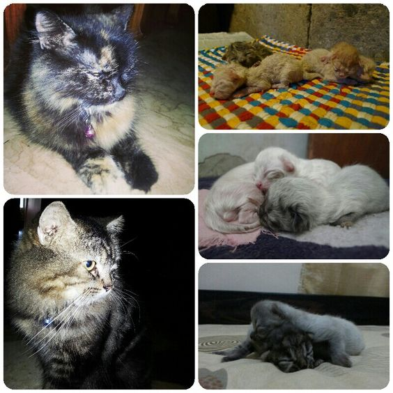 Meet my furry little lovable friends. Pixie and Chuck with their 3 sets of litters/offspring s for the 5-6 years they've been my pets.