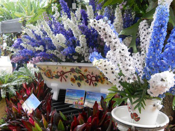 Jardin botanico feria de las flores medellin colombia for Arboles nativos de colombia jardin botanico