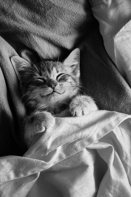 Haaa ce qu'on est bien dans son lit!!!: