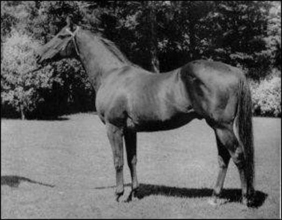Jacks World Horse Pedigree
