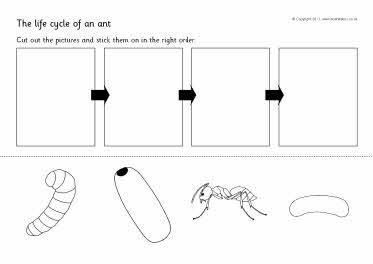 ant life cycle cut and paste science pinterest cut and paste ants and life cycles. Black Bedroom Furniture Sets. Home Design Ideas