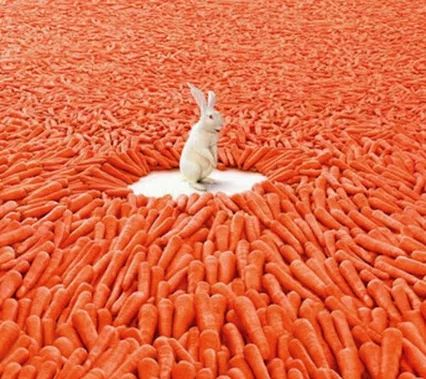 """""""Eating carrots all I like; Living in a Wabbit's Paradise!"""":"""
