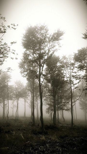 Lost in the mist by Parock, via Flickr