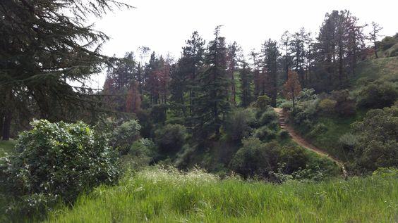 Henninger Flats: Meadows & Tall Trees