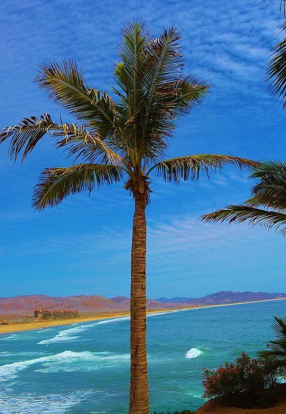 Vamos a Baja Sur's Todos Santos | San Diego Reader