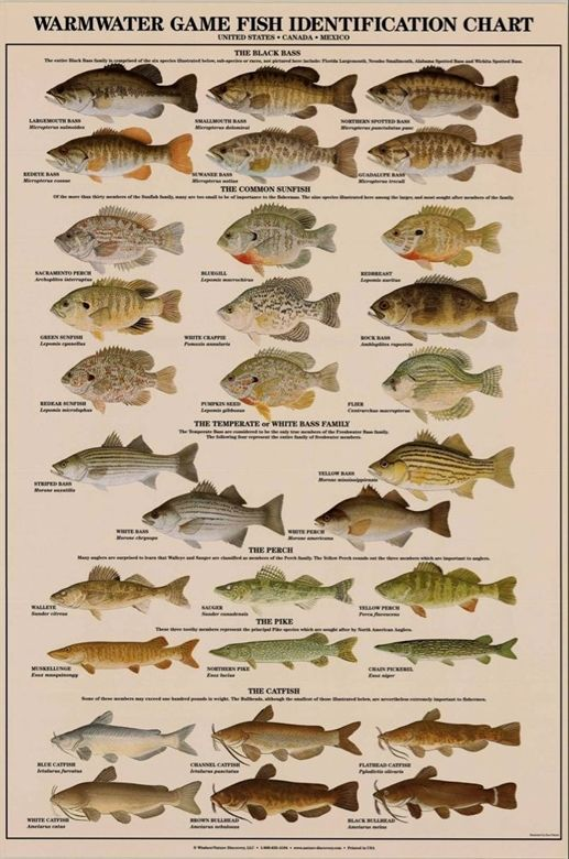 Key Fishing Tips That Everyone Should Know Bass Fishing Tips Bass Fishing Fishing Tips