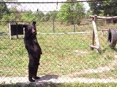 黒いクマが柵の向こうにいる → 完全に中に人が入ってるw - http://iyaiyahajimeru.jp/cat/archives/52803