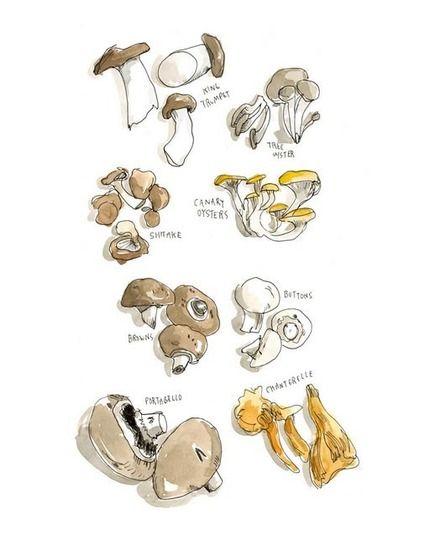 Kitchen Artwork: Vegetable and Mushroom Prints by Wendy MacNaughton