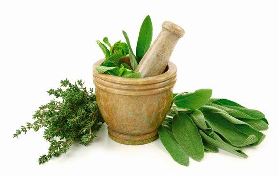 Ervas aromáticas: Como conservar na geladeira | Delicadelas™
