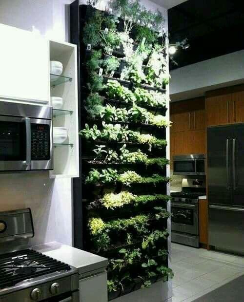 Muro de plantas aromáticas